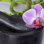 Les orchidées : des fleurs vraiment déco