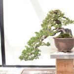 Un cadeau original pour adopter une décoration zen dans sa salle de bain